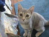 Pixie's story My name is Pixie, I am on the shy side;