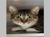 *PIXIE's story 1058841 Pixie is a 1 year old, female, 8