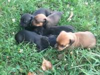 Little bundles of energy. 3 ladies (2 black 1 brown), 2