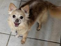 Pixie is 6 years old and 7 lbs. She was surrendered by
