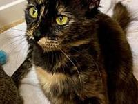 My story Online Adoption Application Hello I'm Pixy. I
