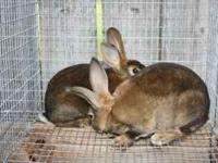 Rabbits, adult and bunnies are ready to go.......