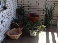 Selection of houseplants, various sizes of planters,