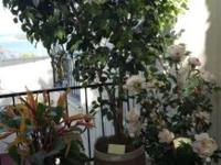 Artificial plants, matching rose trees, bird of