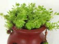 Plants and vegetable plants for sale. Prices range from