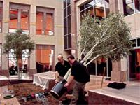 Interior landscaping by Plantscape Inc. is the industry