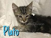 Plato's story -- -- Kitten Division Adoption Center,