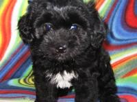 Myloe is an adorable, fun dog and he loves EVERYONE he