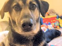 FOSTER HOME URGENTLY NEEDED IN NORTHEAST. Buckshot is