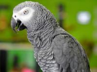 We have a large variety of birds to choose from and