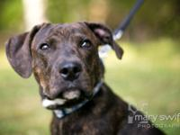 Plott Hound - Luka - Medium - Adult - Male - Dog Hello.
