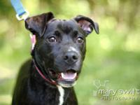 Plott Hound - Marcus - Medium - Young - Male - Dog Hi