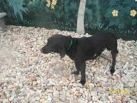 Plott Hound - Mikk0 - Medium - Young - Male - Dog