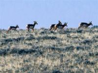 PRONGHORN HEAVEN. This remote 40 acres provides an