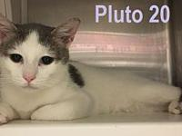 Pluto 20 (bonded with her sister Pluto 21)'s story You
