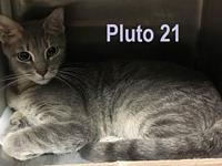 Pluto 21 (bonded with her brother, Pluto 20)'s story