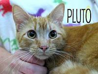 Pluto's story The adoption fee is $85.00 with an