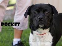 Pocket's story If you would like more information on
