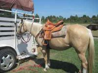 WE HAVE DEEPLY DISCOUNTED THIS HORSE, WE ARE MOVING AND