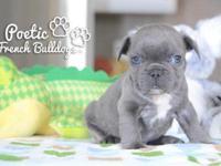 www.poeticfrenchbulldogs.com