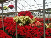 ~~Jack Young Greenhouses~~Over 30 Years in Business~~