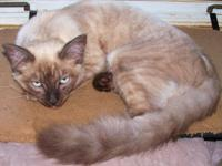 Two Devon Rex/Sphynx Kittens 5 months old. One is Lilac