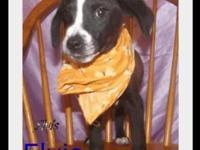 Pointer - Elvis - Medium - Baby - Male - Dog Aint