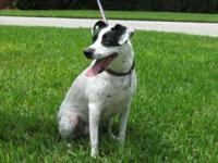 Pointer - Eva - Medium - Adult - Female - Dog Eva is a
