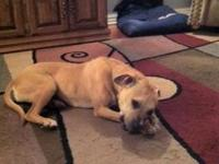 Pointer - Haleigh Fostered - Large - Adult - Female -