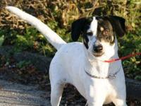 Pointer - Zoey - Medium - Baby - Female - Dog Zoey is a