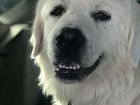 Polar's story Meet Polar! He is a big friendly guy who