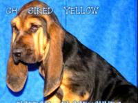 AKC CHAMP SIRED EUROPEAN IMPORTED. Situated in Waldron