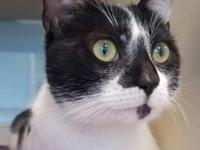 Polka's story Polka is a gentle, quiet kitty who was