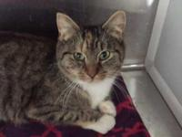 Polly is at our Adirondack Region Cat Adoption Center