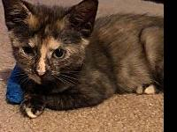 Polly's story This beautiful tortie will melt your
