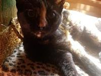 "Polly's story Online Adoption Application Hi I""m Polly."