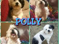 Hello everyone! I'm Polly and I am looking for my