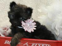 I have 2 lil male pomapoo puppies $575 approx. 4-5