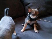 I have 5 pomchi 3 males 2 female ... I am looking for