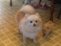 5 year old Pom. Very friendly to all. Including other