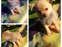 We have 4 insanely cute puppies that need they're