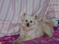 We are looking for a home for Foxy a 3 year old female