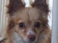 Pomeranian - Graham - Small - Young - Male - Dog We