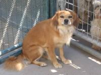 Pomeranian - Mary - Small - Adult - Female - Dog Mary