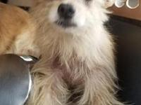 Pomeranian mix's story Please complete our application