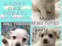 QUARTZ was adopted <3 Adopt one of these tiny