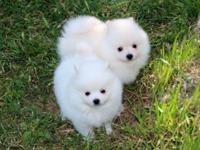 This adorable male and female puppies are ready to find