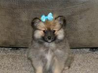I have for sale five pomeranian puppies. Three females