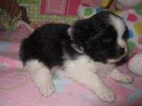 Meet Pandy! She was born Oct 23 and will be ready for