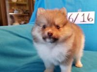 AKC GEM28 OC ONLY CHILD is a handsome outgoing little